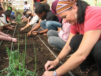 Planting seedlings in Indonesian greenhouse